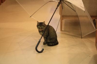 部屋の中で雨宿りするネコ店長