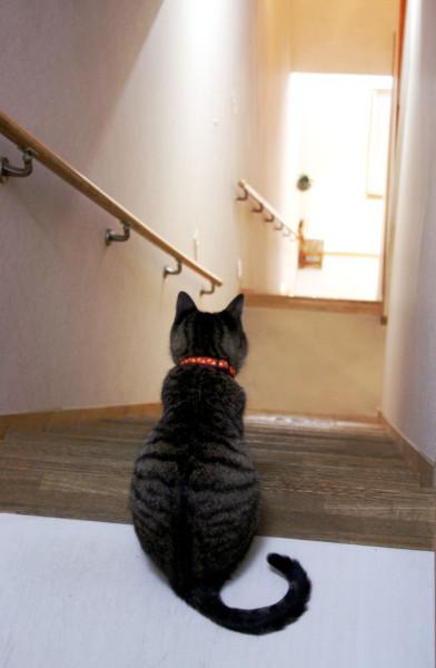 階段下を眺めるねこ店長