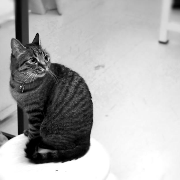 猫の日みーちゃん
